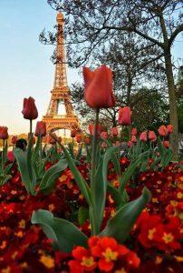 ecole Maud kristen - fleurs